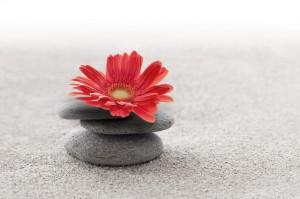 Sable et gerbera zen